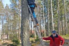 Uppsättning av holkar i Vallaskogen